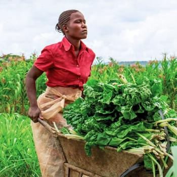 Empresa de Comercialização Agricola