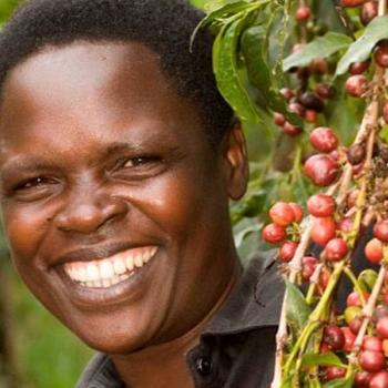 Ibero Uganda Limited